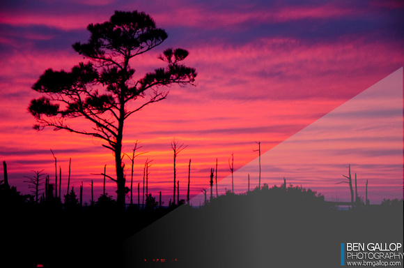 Cypress Sunset